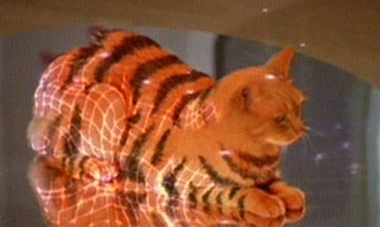 Hologram cat
