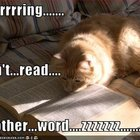 Boring book cat
