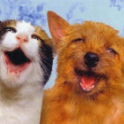 Cane gatto felici