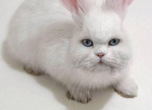 Animale mezzo gatto mezzo coniglio