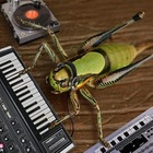 Funny picture fun art grasshopper