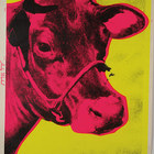 Andy warhol cow pink