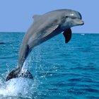 Delfini foto 3