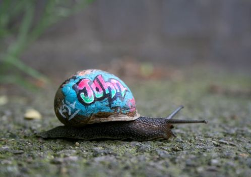 Snailgraf1 blog