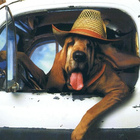 Driving hound 906