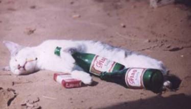 Gatto ubriaco