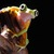 0220frog