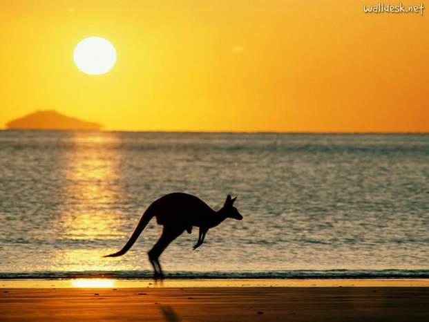 Taking joey home  australia