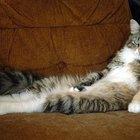 Lazy cat 25255b1 25255d