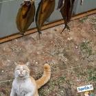 Gatto affamato che sta per saltare