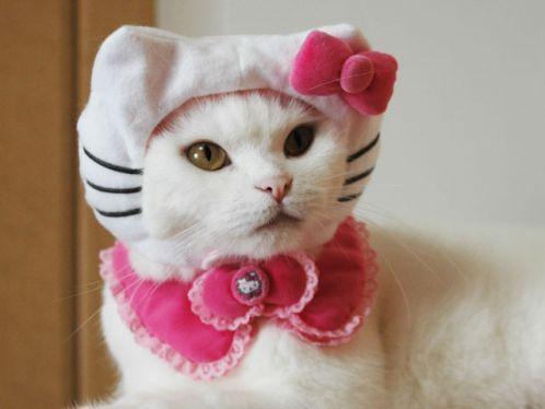 Kitty prin02
