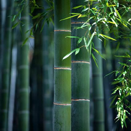 Bambu bamboo sostenibile bambu architettura sostenibile case in bambu bioarchitettura bambu architettura bambu 2