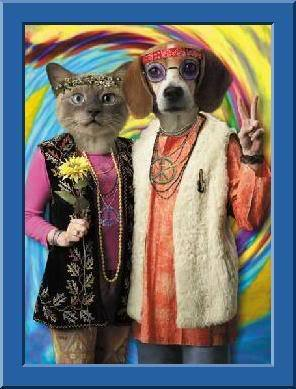 Cat dog hippie