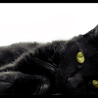 The real black cat by tatumtxi