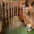 Cavallo con treccine