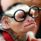 180px scimmia nerd
