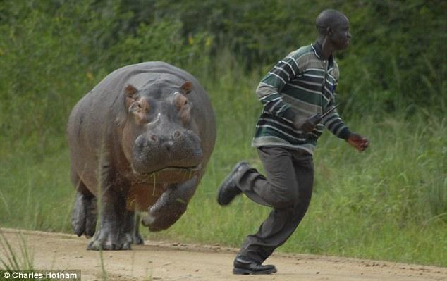 Hippo 20attack 20uganda
