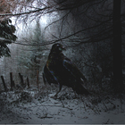 Wallpaper crow in the snow by losselith