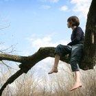 Climbing tree1