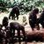 Sci bonobo ape