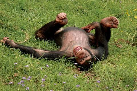 Scimmie 20 3