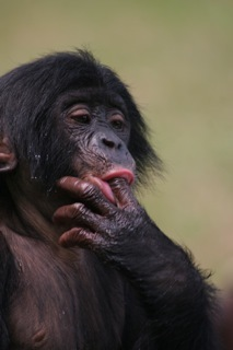 Scimmie 20 5
