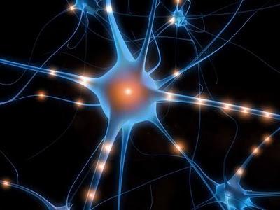 Neurone rigenerazione cervello1