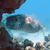 Pesce 20istrice