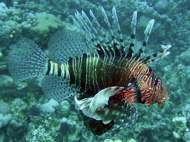 Pesce 20leone