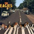 The 20beagles