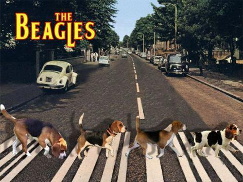 The 20beagles