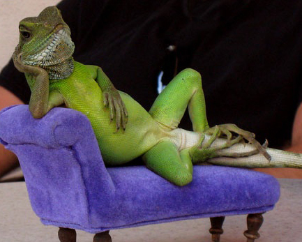 Camaleonte in relax m