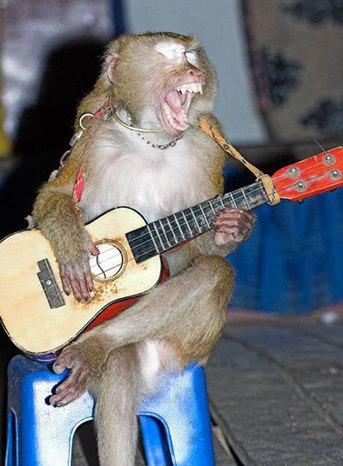 Rock monkey