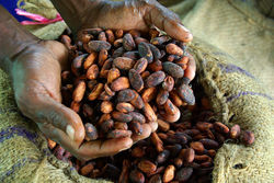 Cocoa Supply Chain Sustainability
