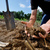 General Mills and The Nature Conservancy Advocate for Healthy Soils: A Global Priority for Conservation & Business