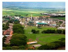 Sweet Fuels: Colombia's Super-Efficient Sugar Ethanol