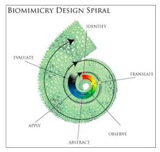 Biomimicry design spiral