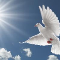 tribute for betty jane goater baird case jordan fannin funeral