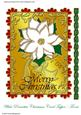 White Poinsettia Christmas Card Front/ Topper
