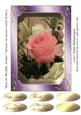 Rose in Metallic Frame Various Occasions Card Front 5