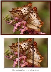 Butterfly Couple Panel Card