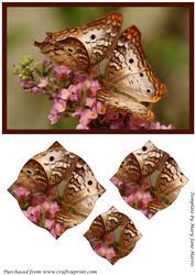 Butterfly Couple Splendid Pyramid
