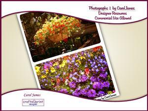 Floral Photographs 1
