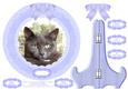 Orlando Grey British Shorthair Plate Card,stand & Sentiments