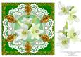 8 x 8 White Lily Flowers Pearls and Vintage Lace Green Card