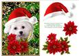 Santa White Puppy Dog Bichon Frise and Poinsettia Flowers 4