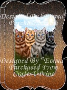 Beautiful Tabby Cats Notelet Card Gift Set