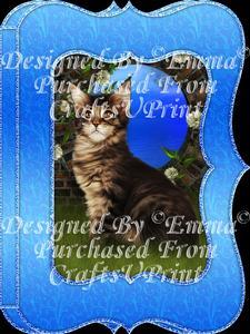 Cute Fluffy Kitten Notelet Card Gift Set 5 of 5