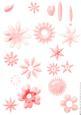 Shabby Chic Flower Petal Sets (pink)