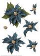 Poinsettia Decoupage Sheet Blue